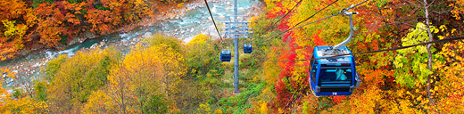 AutumnFoliage In Prince Snow Resorts