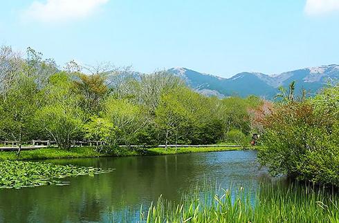 箱根濕地花園