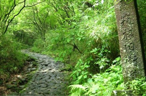 The Old Hakone Road