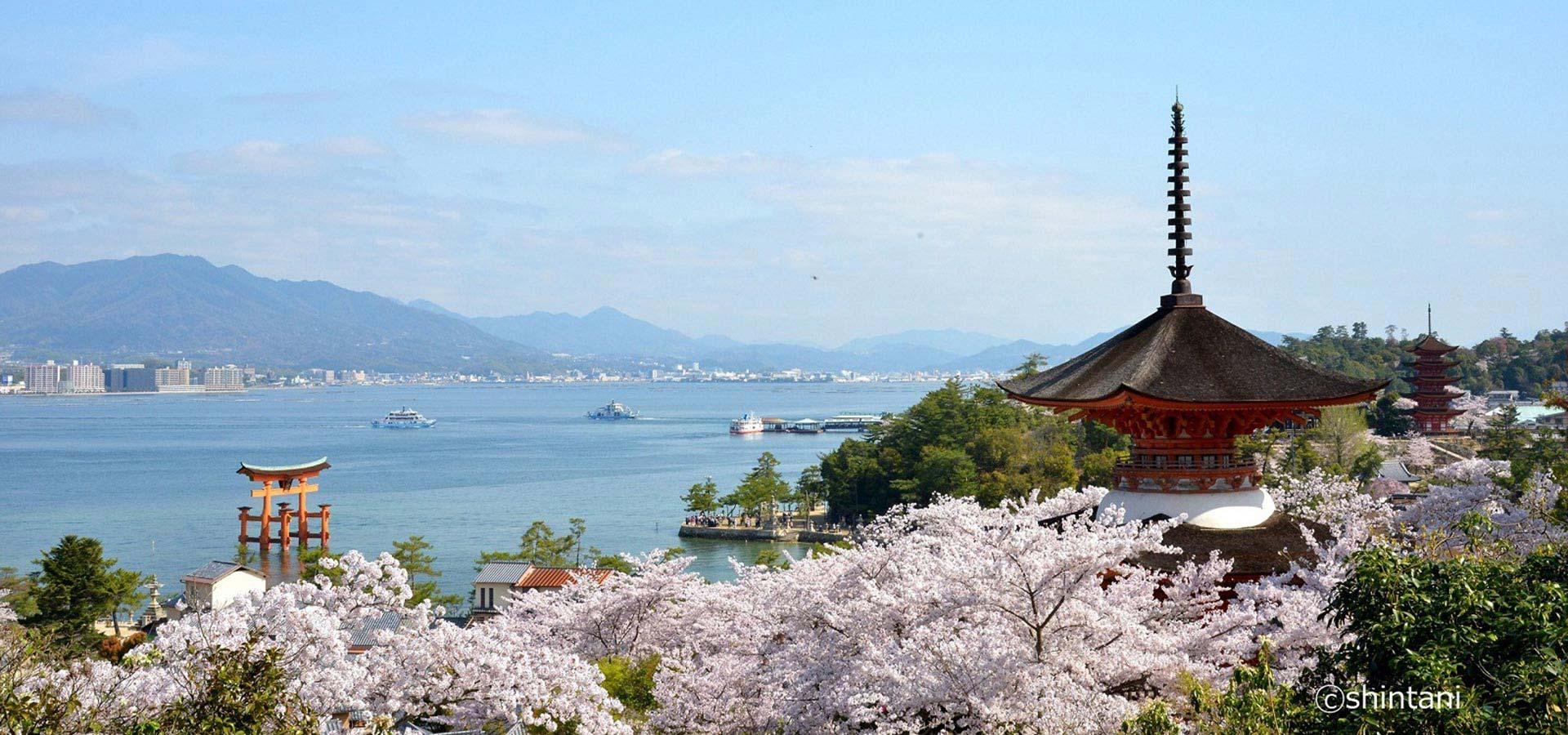 히로시마・세토우치 봄 절경 투어