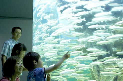 琵琶湖博物馆