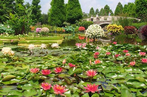 水之森水生植物公園