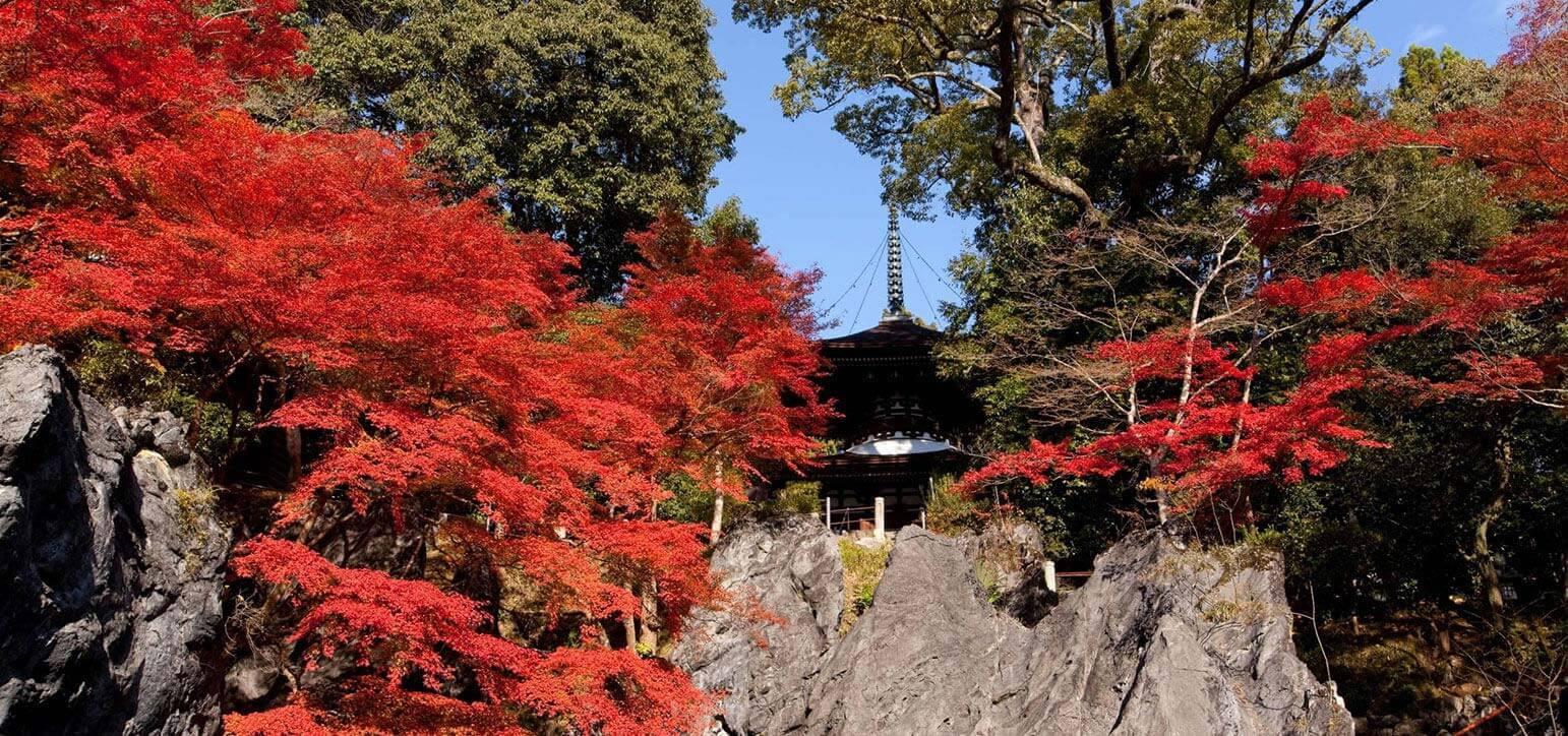 Shiga Area Travel Information