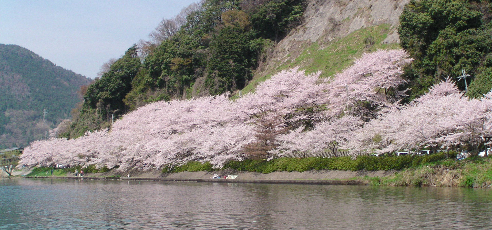 Cherry Blossoms at Kaizu-Osaki (spring)