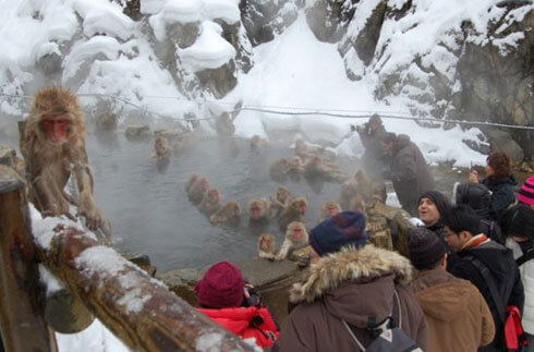 Snow Monkey Park (Jigokudani Yaen Koen)