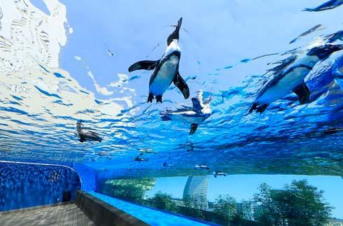 Sunshine国际水族馆