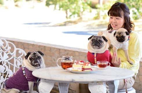 "Information about setting up a lounge ""Yamaboshi"" dog companion space"