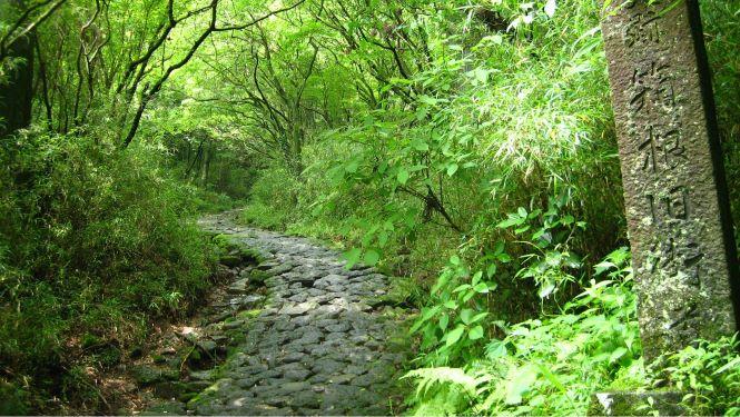 The Old Hakone Road