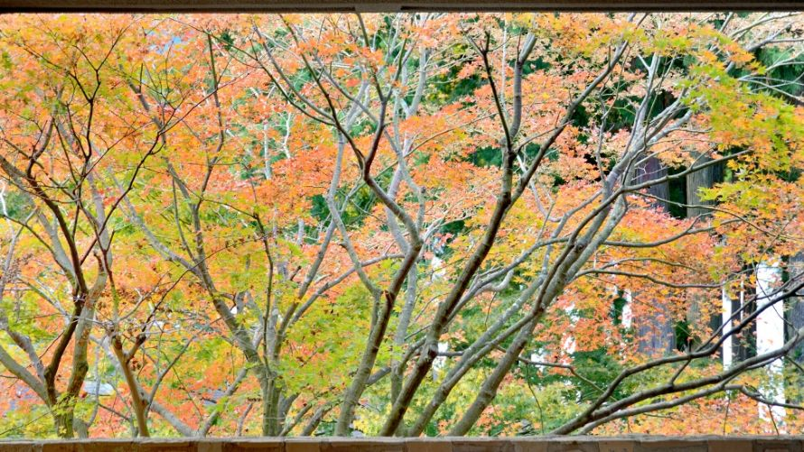 How about come to Hakone and see the autumn leaves?