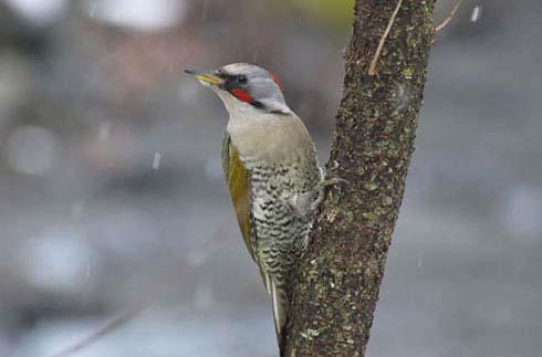 KARUIZAWA WILD BIRD PARK