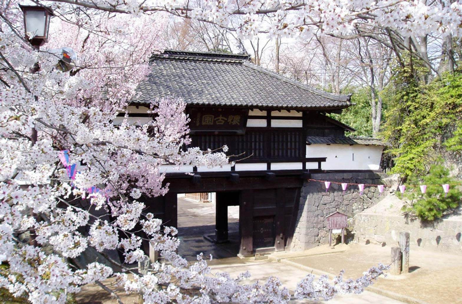 Local attraction: Cherry Blossom Festival at Ruins of Komoro Castle!