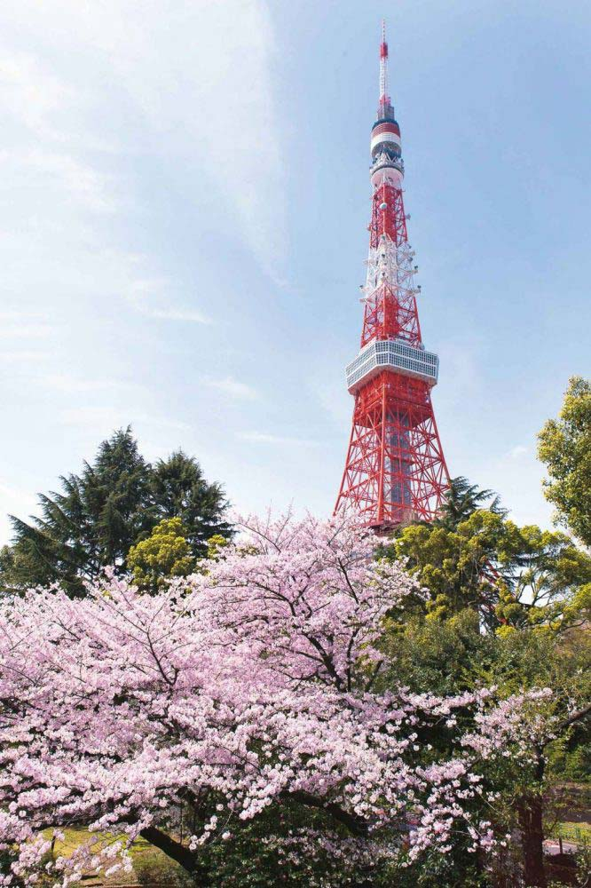 tokyotower-and-sakura